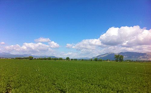 i campi di carote nella valle del fucino