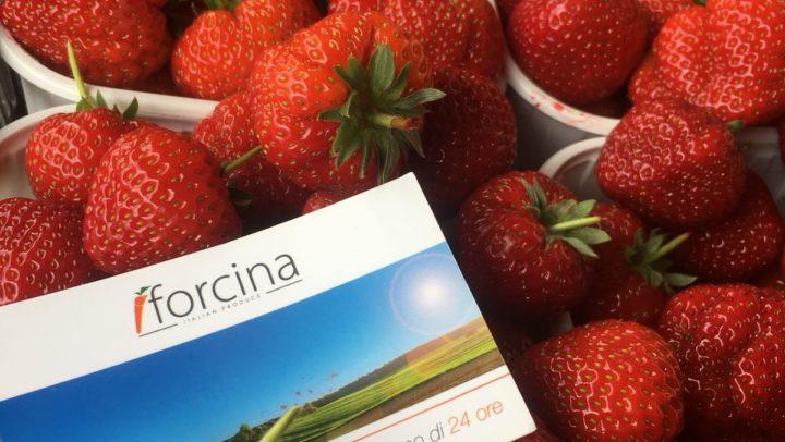 """FORCINA ITALIAN PRODUCE distributore esclusivo della Fragola """"Favetta di Terracina"""" – Ferrante"""